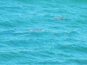 16dauphins.jpg