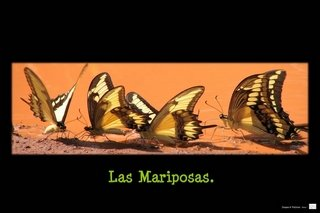 mariposas320.jpg